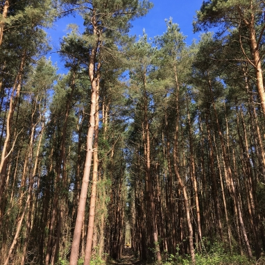 Co-operative Supporting Local Charity and Improving Unmanaged Woodlands