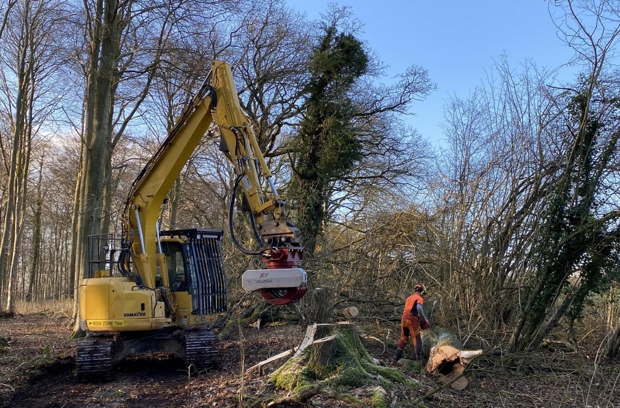 Teamwork making dismantling Ash dieback safe for all. Radio communications are proving vital.
