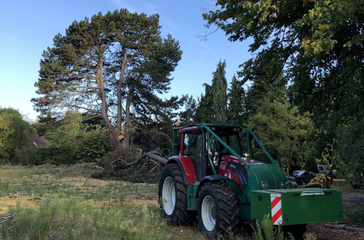 Uniforest remote controlled winch assisting the felling of this unsafe Corsican Pine
